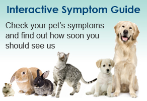Visit The Pet Health Partnership Symptom Guide For Pets